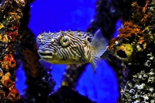 mystic fish