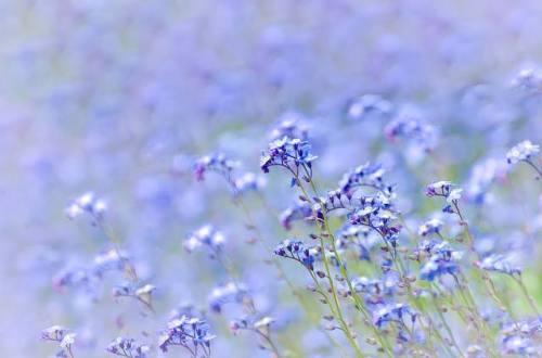 thyme lavendar